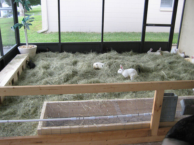 Raising Rabbits For Meat The Adventure Bite