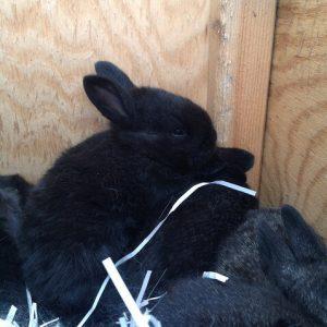 Baby Bunnies Update